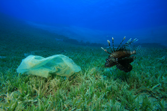 16_Plastic to outweigh fish in oceans report