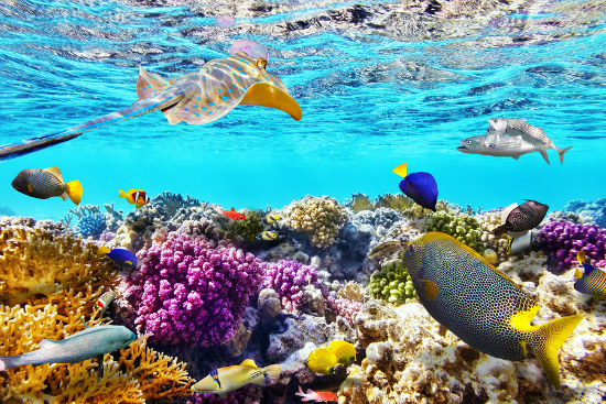 09_Qld reef scientists fear _mass bleaching_